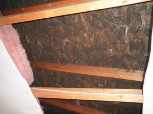 Water Damage Restoration of Attic Joists